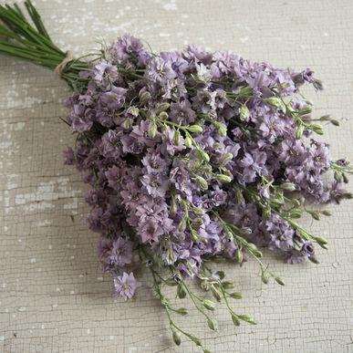 03347_01_misty_lavender.jpg