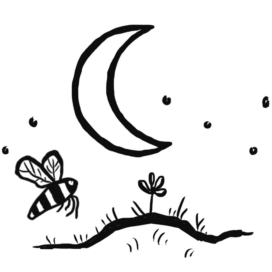 moon and bee.jpg