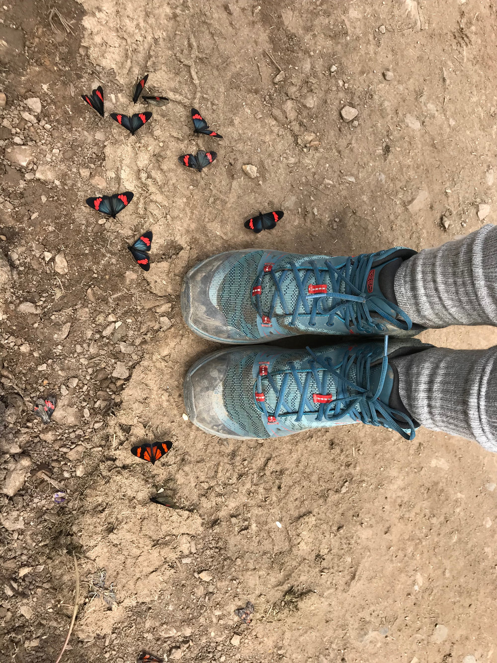 These butterflies on the trail matched by fantastic Keen boots. Salkantay Trek, Peru.