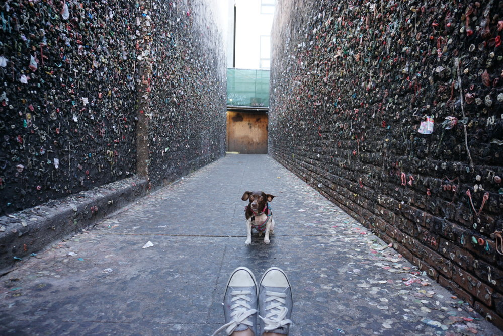 Moo in the middle of Bubblegum Alley in SLO