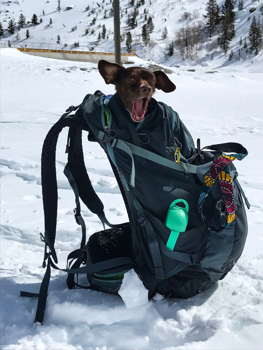 This is my oversized day pack that I purposely carry if I am doing big miles with Moo, as she fits very comfortably in this pack. The water bottle in the side pocket is her dog-friendly water bottle. If I set the pack down on the trail and if she tries to jump into it, that is a signal that she is tired and wants a lift.