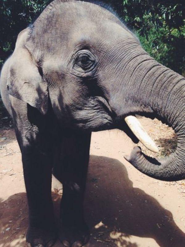 elephant playdate