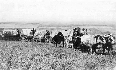 Made July 2, 1897 near mouth of Emigration Canyon, Salt Lake City, Utah. OX Teams 1897.  Used by permission, Utah State Historical Society, all rights reserved - Photograph: Salt Lake Tribune.  Wagons stop, perhaps for the camera. This view is also looking generally south from the bench north of Emigration Canyon. The undeveloped land in the distance, on the south side of Emigration Creek, is now home to thousands.