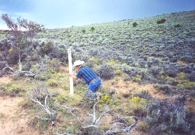 9. Made 8/2397 near Muddy Creek, WY. Al Mulder Attaches Decal To Carsonite Marker SW of Ft. Bridger, WY.  Photograph by Steve Berlin.  Carsonite markers appear to exert an irresistible attractive force on Al Mulder, who stopped at each one we passed in order to add decals indicating California Trail, Mormon Trail and where appropriate, Pony Express Trail.