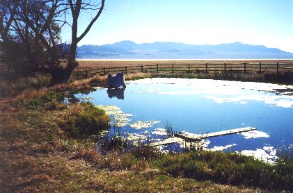 4. Made 10/18/97 , ~22 miles North of Wendover, UT.Donner Spring at Foot of Pilot Peak. Photograph by Steve Berlin.  This is Donner Spring, life-giving font to many struggling emigrant trains on the Hastings Road. View looking southeast. In conjunction with the 1994 OCTA convention in Salt Lake City the Utah Crossroads Chapter fenced the spring to protect its natural and historic values, erecting several panels that describe the life-saving importance of these waters for people and animals that made it across the arid 83 mile expanse of salt desert to the east, a portion of which is the sliver of white just below the distant mountain.