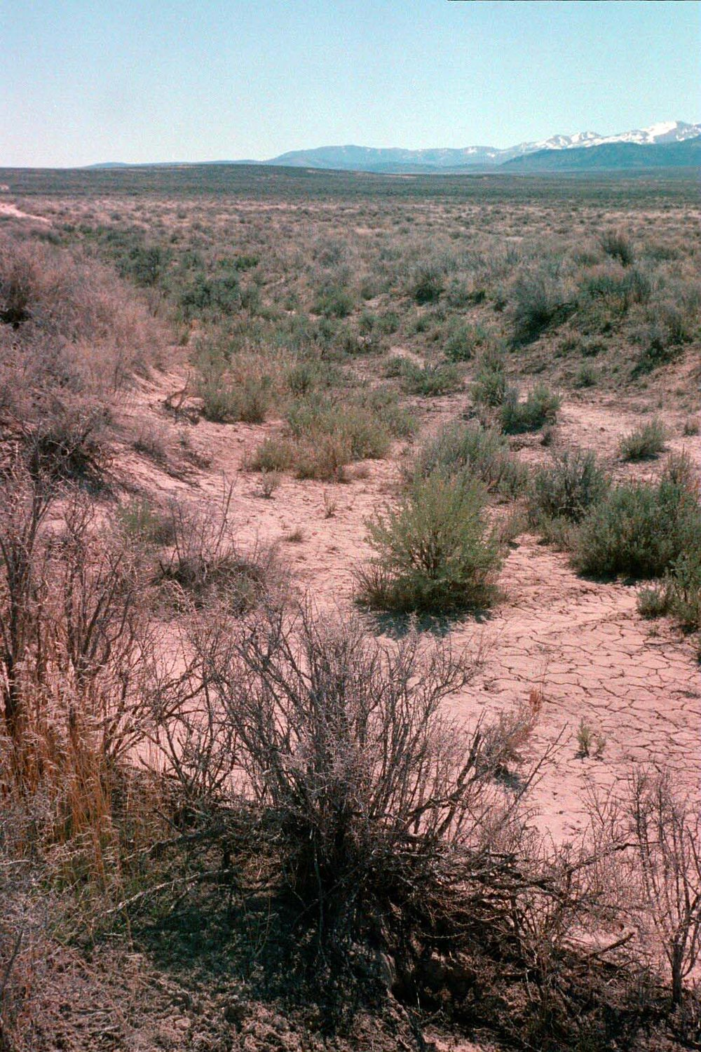 141a_Hensley ruts NW of Naf na.jpg