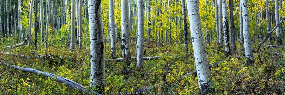 """AUTUMN AT OWL CREEK"""