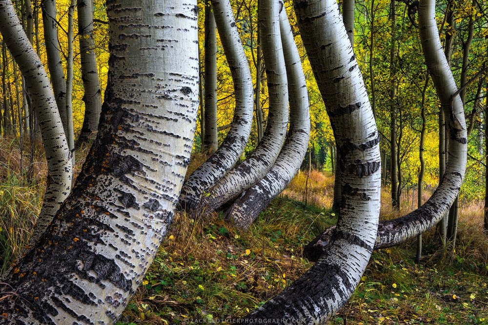 Forests & Trees -
