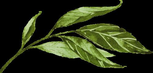 luontolaulu_leaf