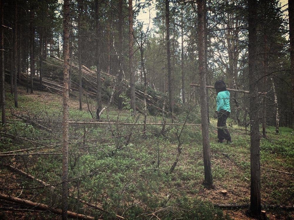 Metsätyöt 28 asteen helteessä paarmojen keskellä ovat välillä ekstremeä, mutta kuukkelit ja satunnainen tuulen vire pitävät mielen korkealla.