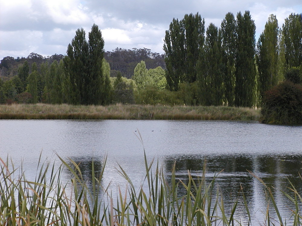 Help us develop visions of water in our city - Such as beautiful streams of healthy water continuously flowing through billabongs and wetlands?
