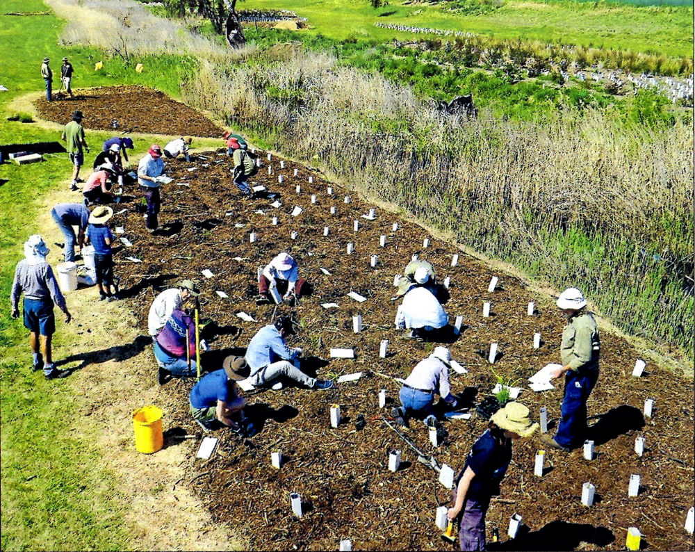 Armidale Urban RIvercare Group (AURG) holding a working bee planting eucalypts, tea trees and snow grass along edges of Dumaresq Creek - Armidale Express Extra (10/2/2016).