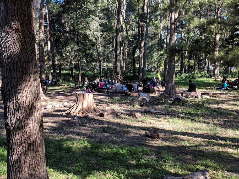 Learning about nature in a shady grove of  Casuarina