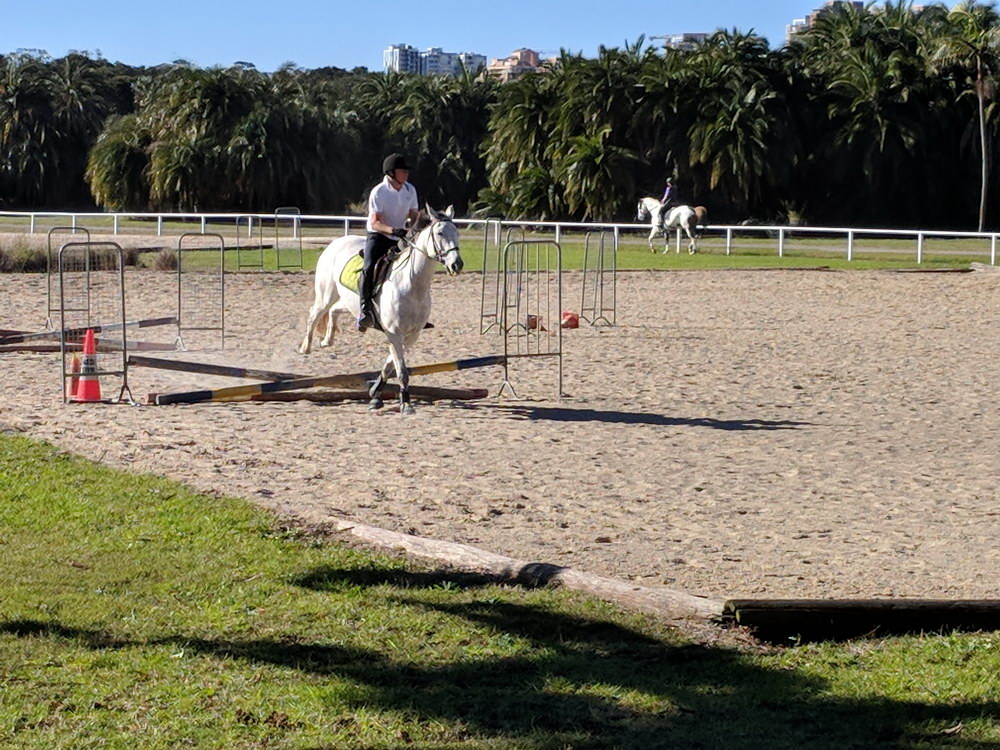 Horse exercise area