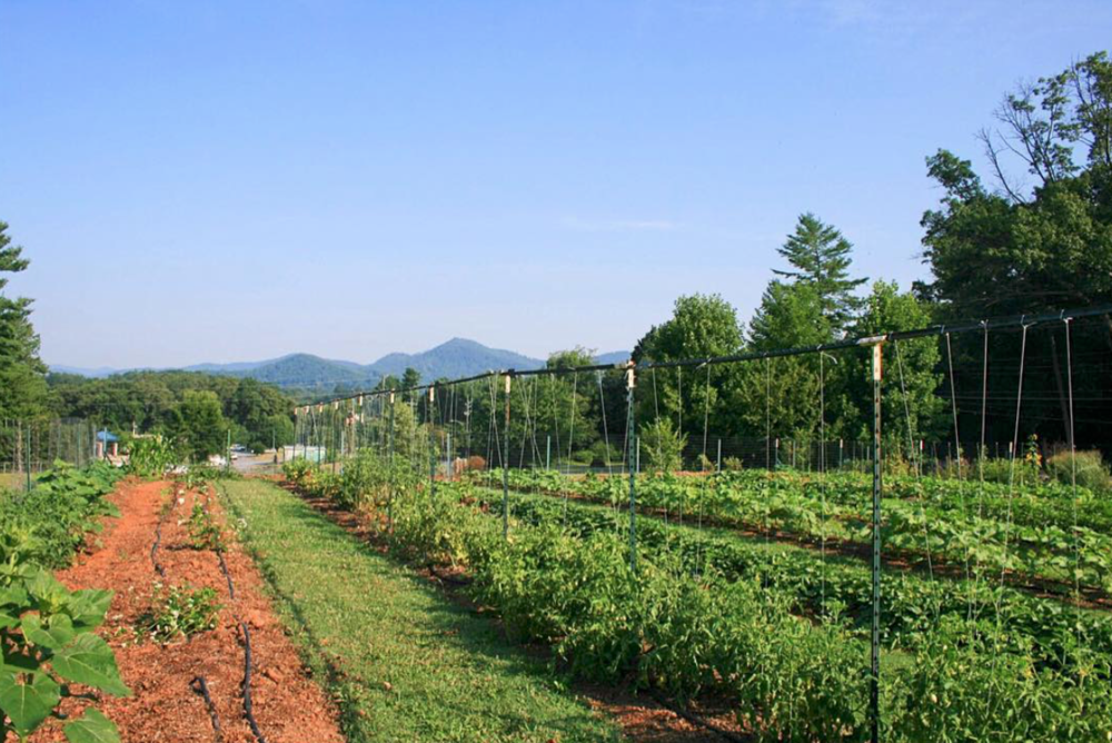 Image from CompostNow IG feed of one of their garden partners' fields -a community garden in Asheville. This is a perfect example of how your support of sustainable dining comes full circle.