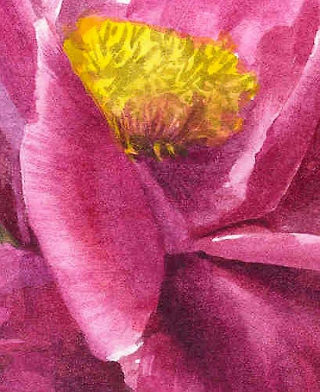 Paeonia lactiflora  'Sir Edward Elgar' detail 2000
