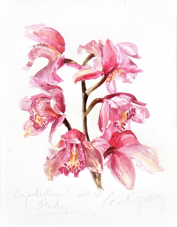 Cymbidium  florist's hybrid 1994