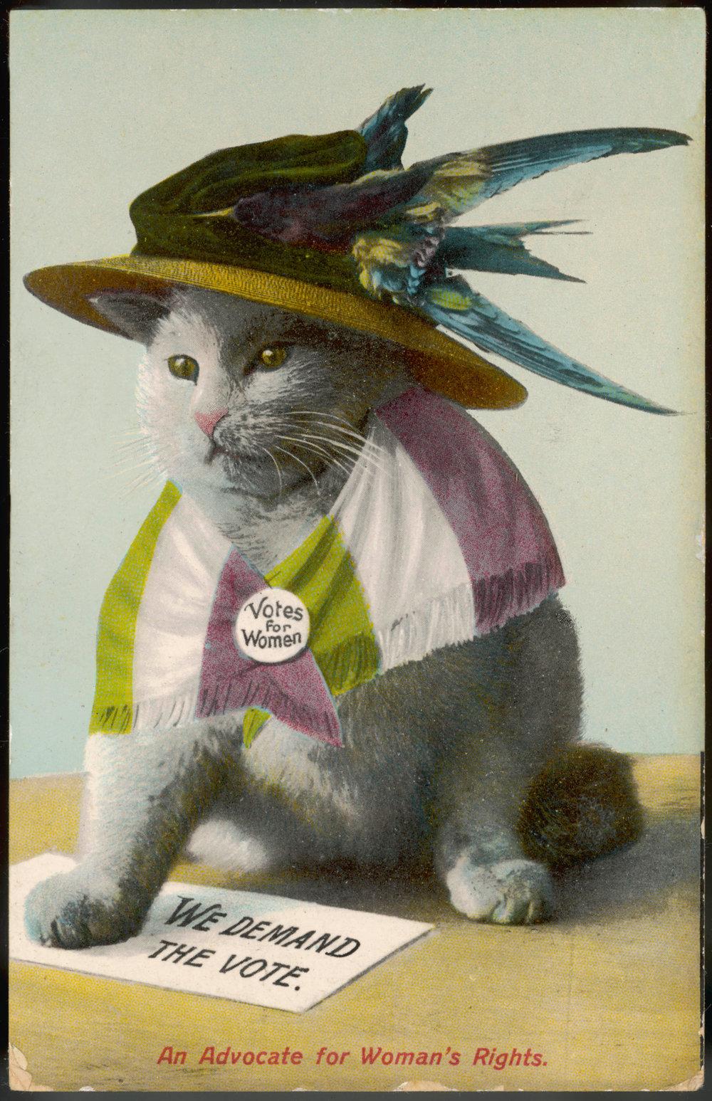 Etta Lemon Cat.jpg