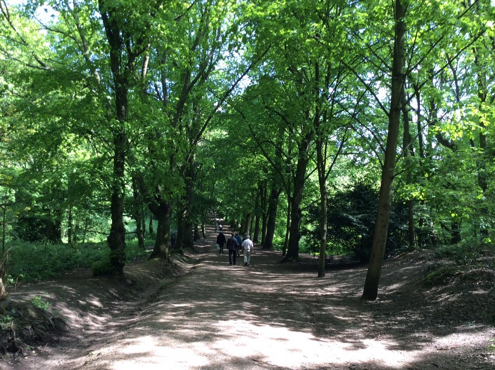 Hampstead woods