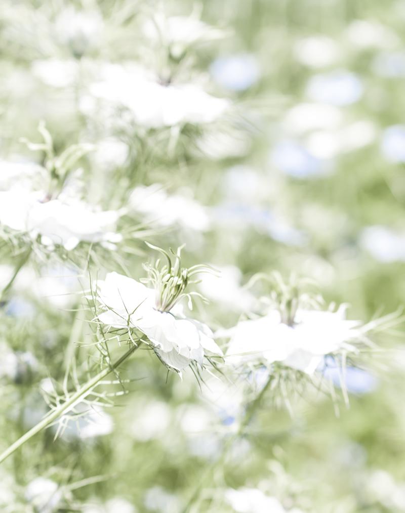 shaws flower.jpg