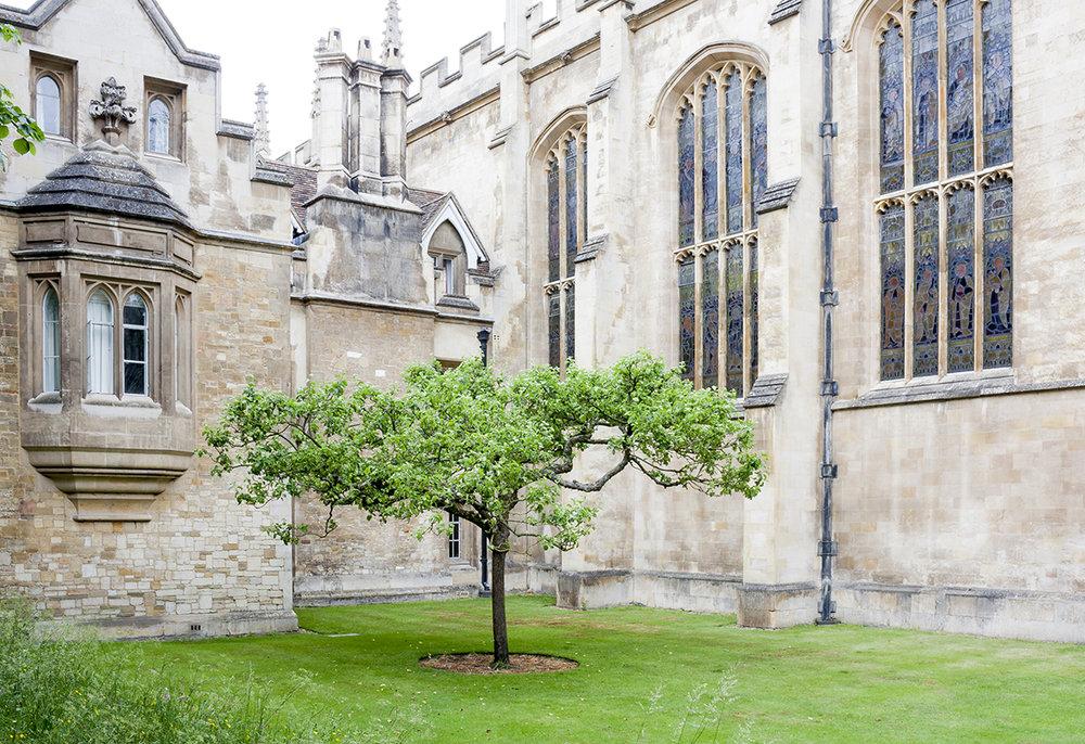 trinity tree.jpg