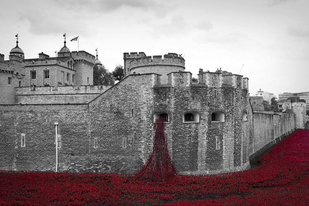 tower poppies.jpg