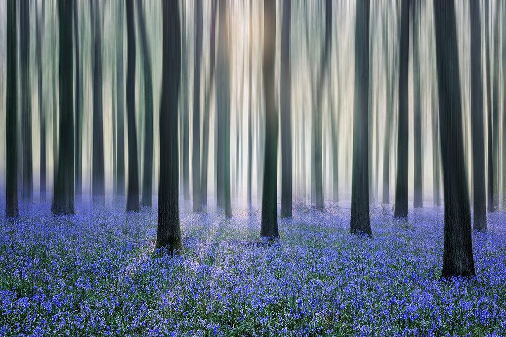bluebell woods_2018_25.jpg