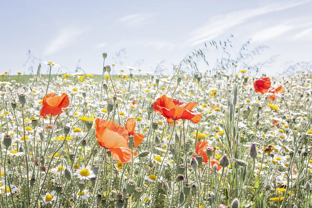 summer wild flowers.jpg