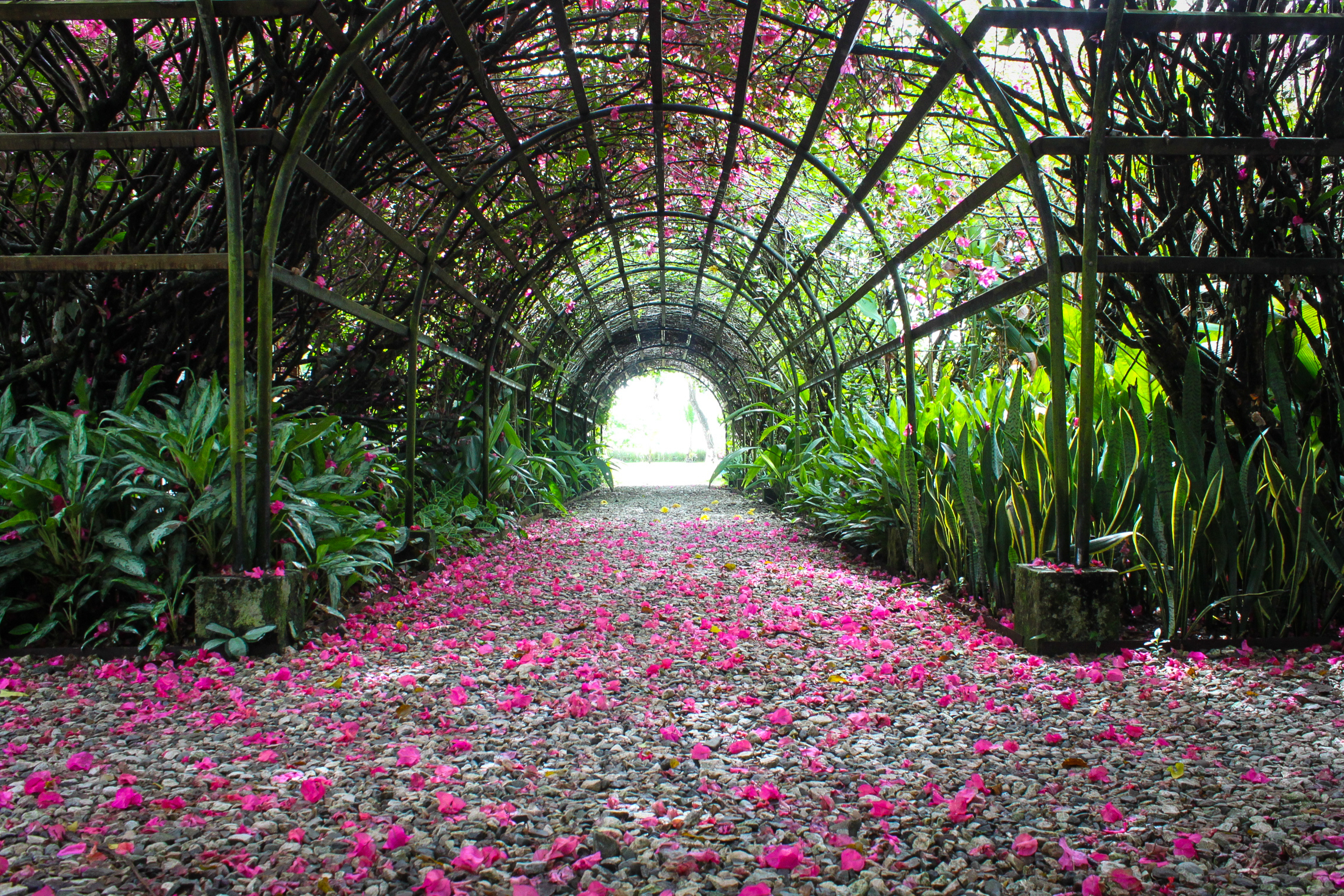 I fell in love with this tunnel right when I got here