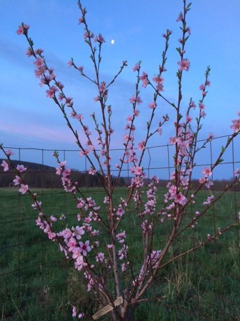 spring4.jpg