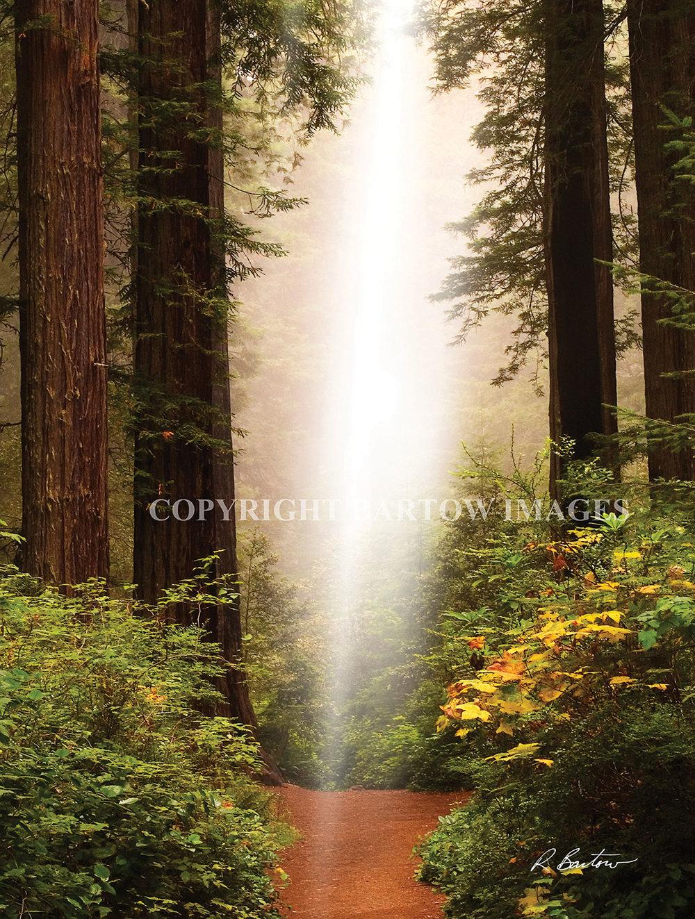 Light-My-Path.jpg