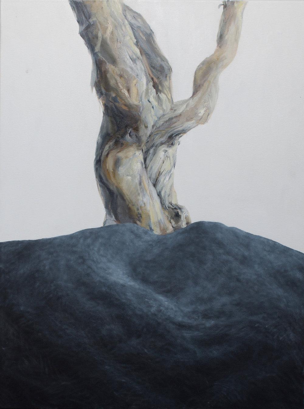 """""""Asphalt, Tree"""""""