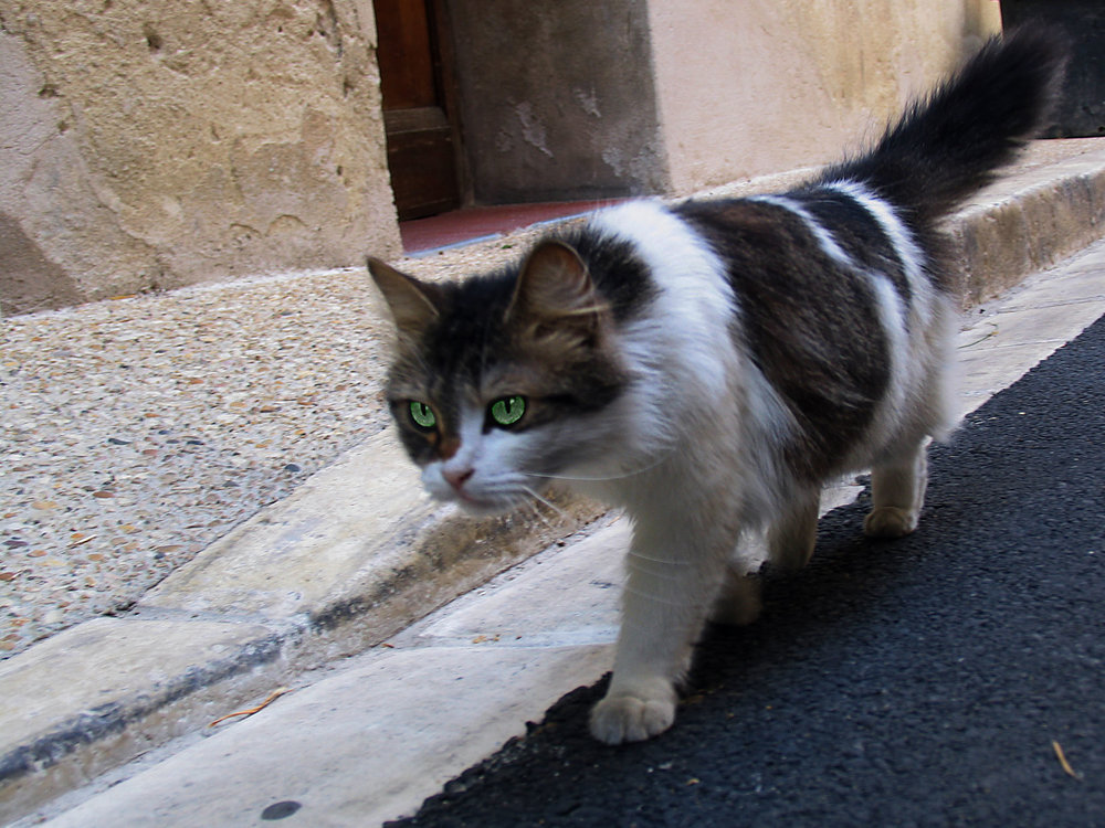 Stalking cat - St-Rémy-de-Provence, France