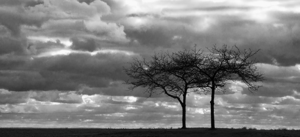 2 Trees in the Breeze