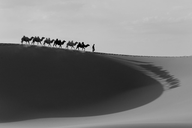 camel_DxO 2 (3) - Version 2.jpeg