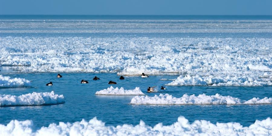 Icy Lake Erie_AMSenita_25168.jpg