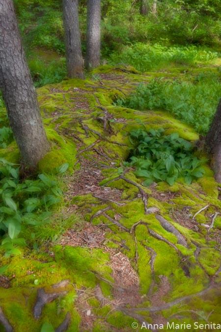 Mystical Path To The Shire_AMSenita_15608.jpg