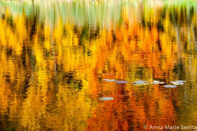 Reflections_AMSenita_9120s.jpg
