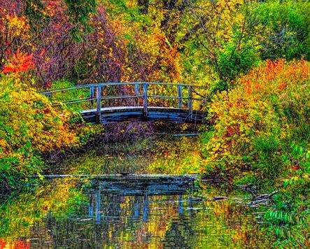 Autumn Arch.jpg