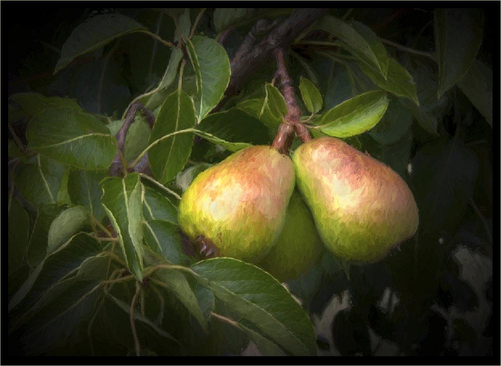 Patty Raydo-A Pair of Pears.jpg