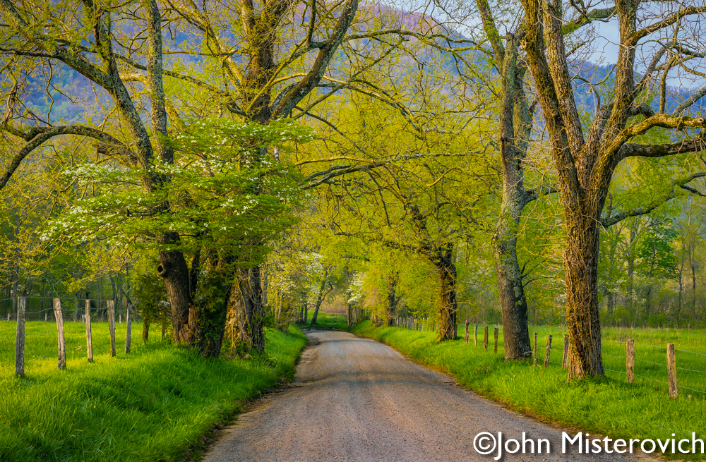 Signs of Spring by John Misterovich