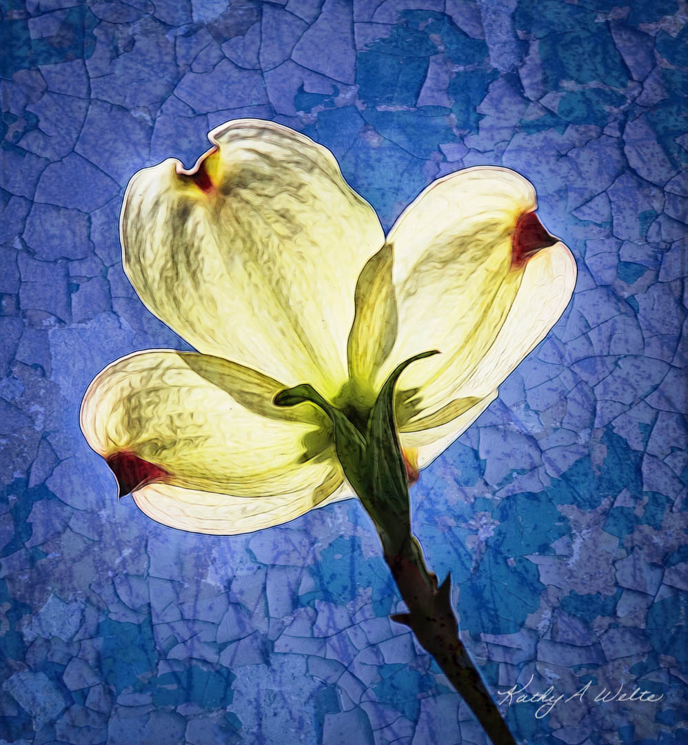 Dogwood on Blue by Kathy Welte