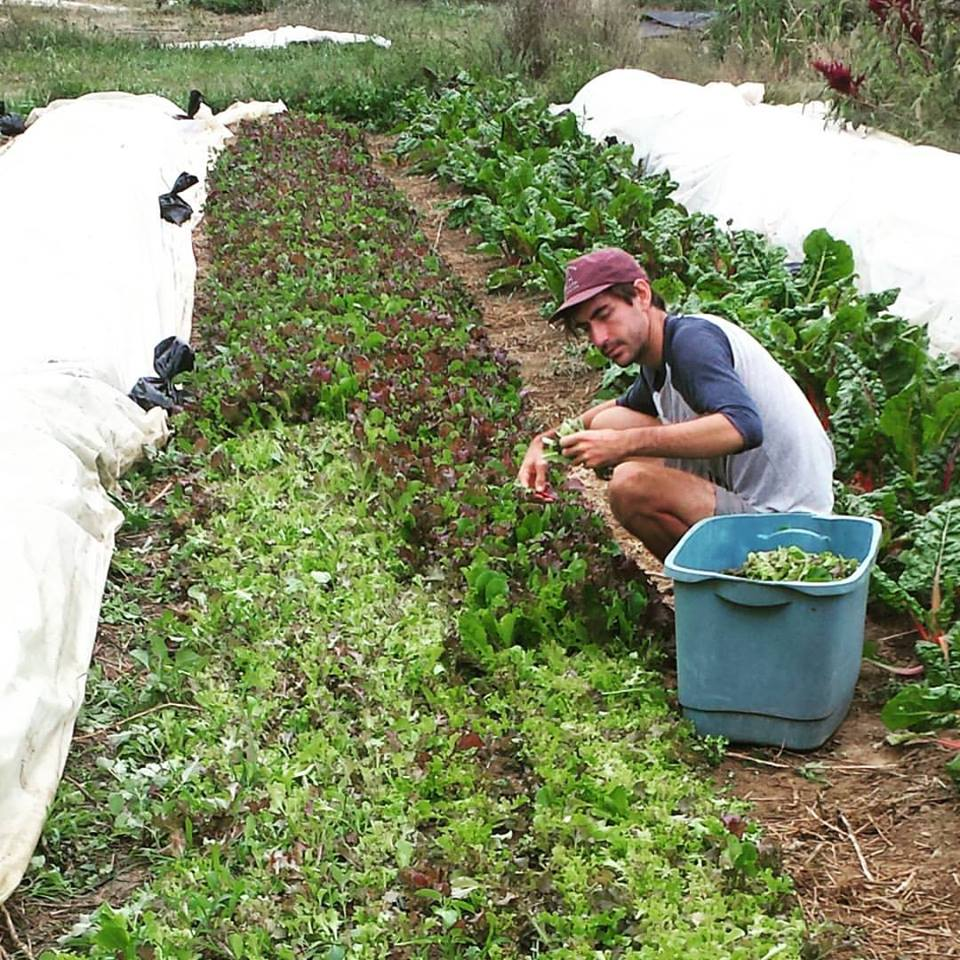 nick cutting lettuce mix.jpg