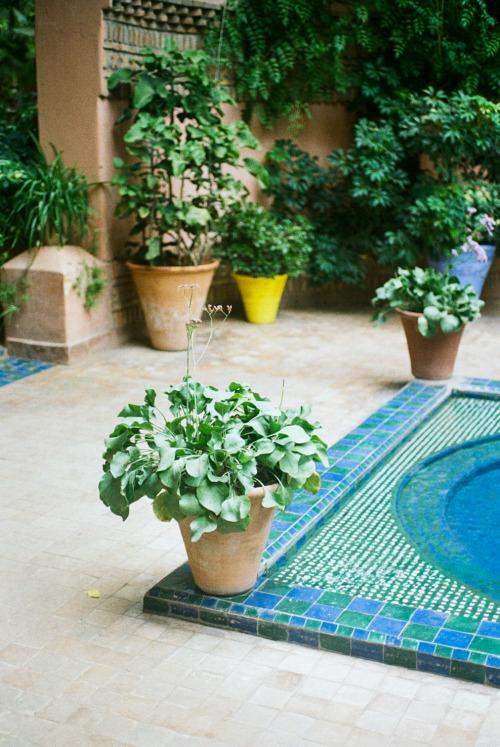 jardin 2.jpg