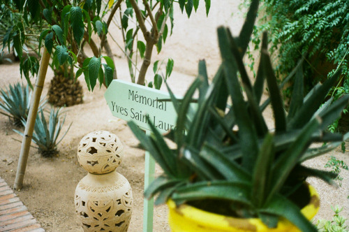 jardin majorelle -