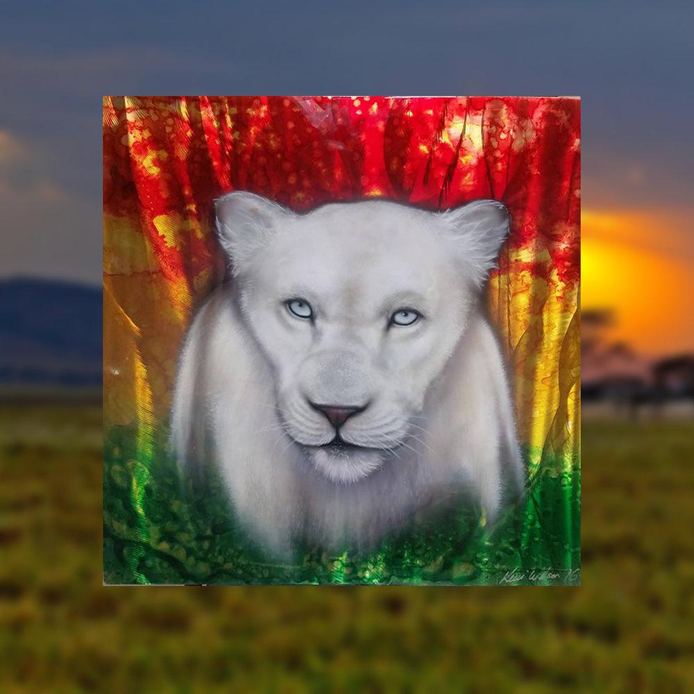 Albino Lioness