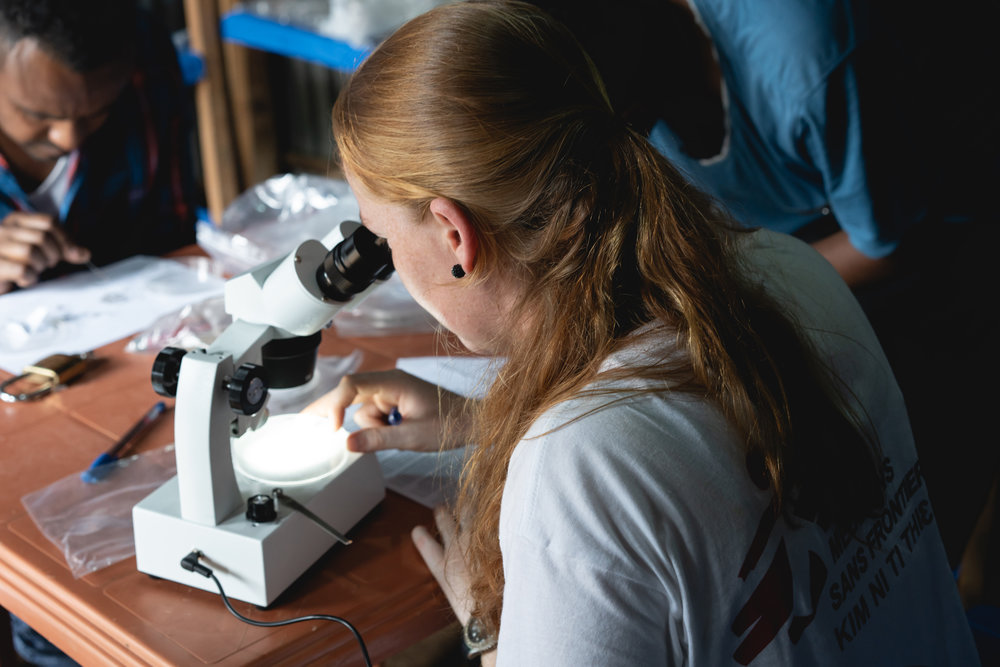 Jeanine looks at some of the mosquitoes caught to determine their specific type