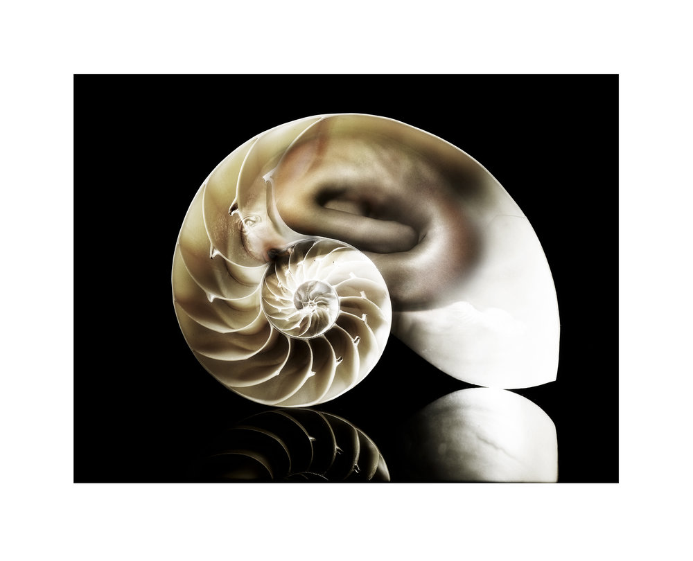 ' Spiral of Life '   Malcolm Dare  Archival print on Hahnemuhle Photo Rag  R 19 000.00 excl. vat