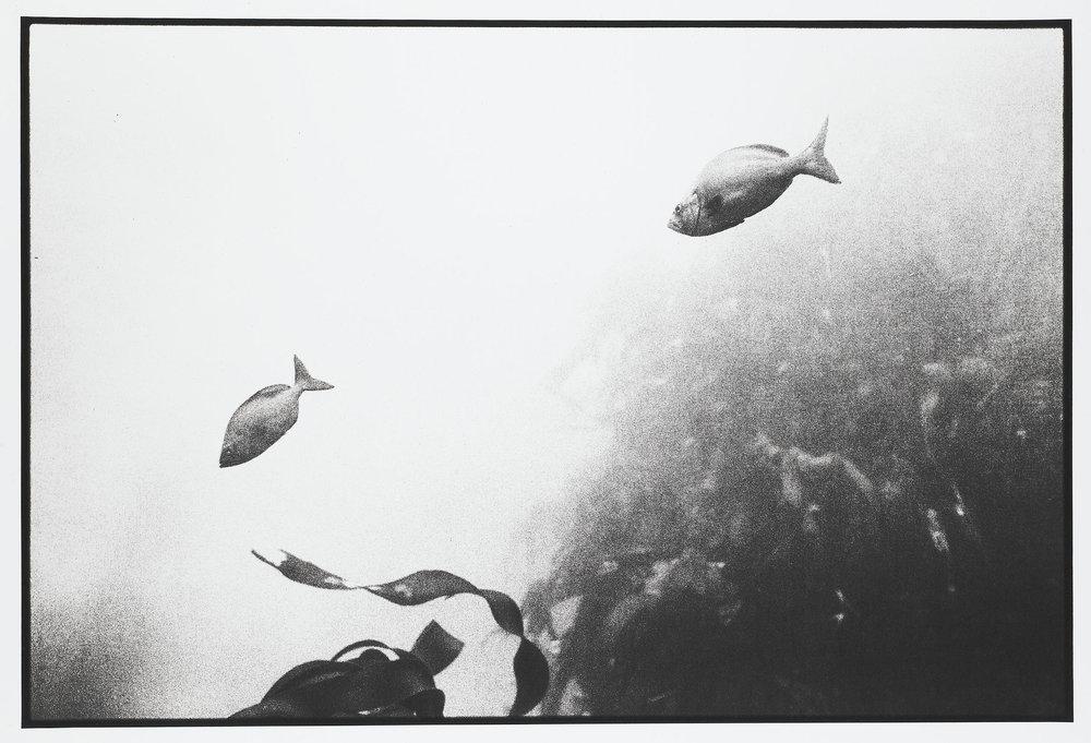 milkfish 2.jpg