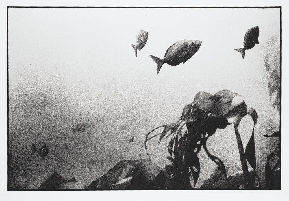 milkfish1.jpg